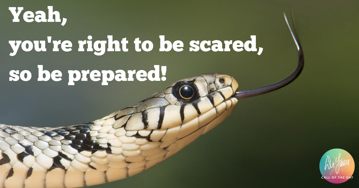 Call of the Day Podcast: I'm Terrified Of Snakes!